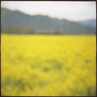 """Mustard"" Photography"