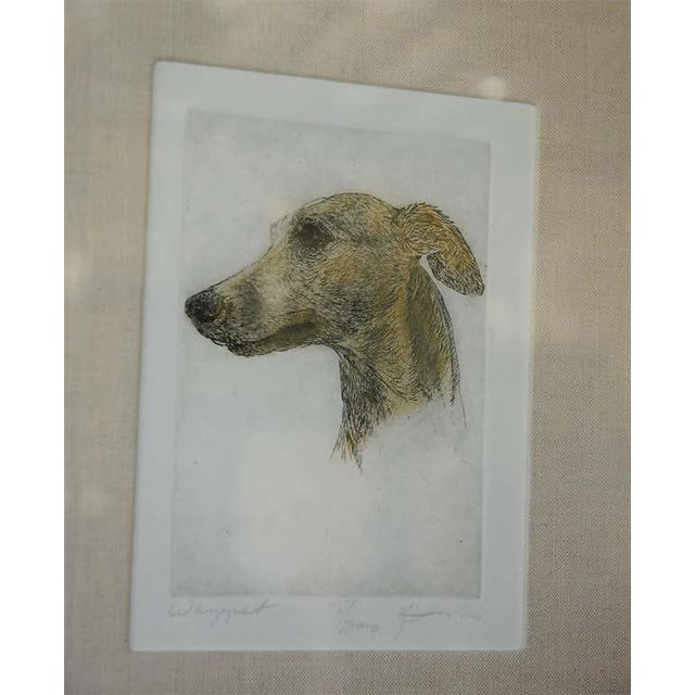 Hand colored dry point etching of a Whippet by Geoffrey Lasko with new framing and matting. Signed. (the other photos were...
