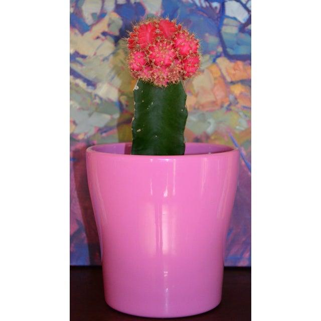 Petite Pink German Planter - Image 9 of 11