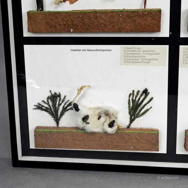 Vintage School Teaching Display Of Usefull Insects For Sale - Image 4 of 6