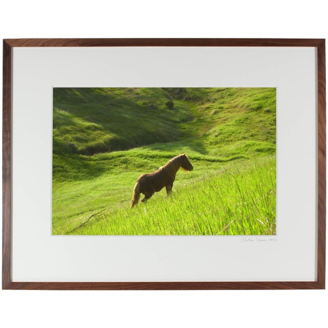 """Please allow at least 14 days for printing and framing before a piece is shipped. Entitled """"Stallion in Green Meadow"""",..."""