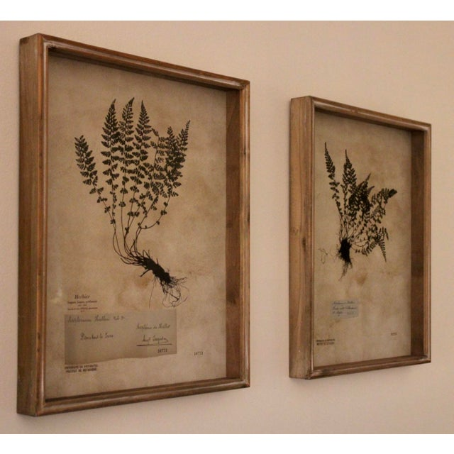 Botanical Prints in Reclaimed Wood Frames - a Pair For Sale - Image 6 of 7