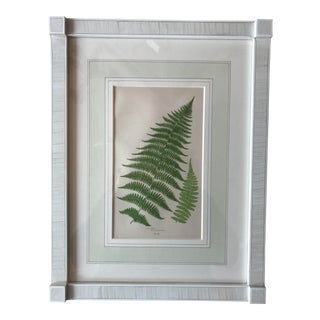 19th Century French Lady Fern Lithograph For Sale