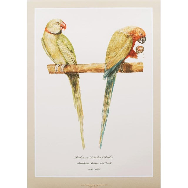 1590s Large Print of Alexandrine Parakeet & Red-Breasted Parakeet by Anselmus De Boodt For Sale