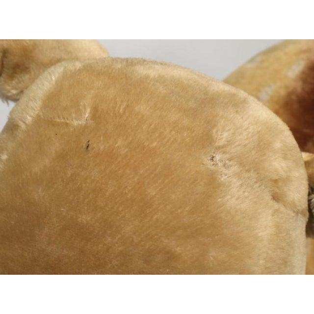 """1963 Steiff Mohair Fallow Deer """"Studio Animal"""" For Sale - Image 10 of 13"""