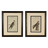 Image of Late 18th Century Antique Framed German Bird Prints - A Pair For Sale
