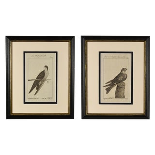 Late 18th Century Antique Framed German Bird Prints - A Pair For Sale