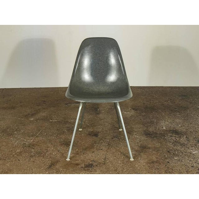 Only 3 chairs left, but sold individually. Picture is not updated. Elephant hide gray Eames fiberglass shell chairs on...