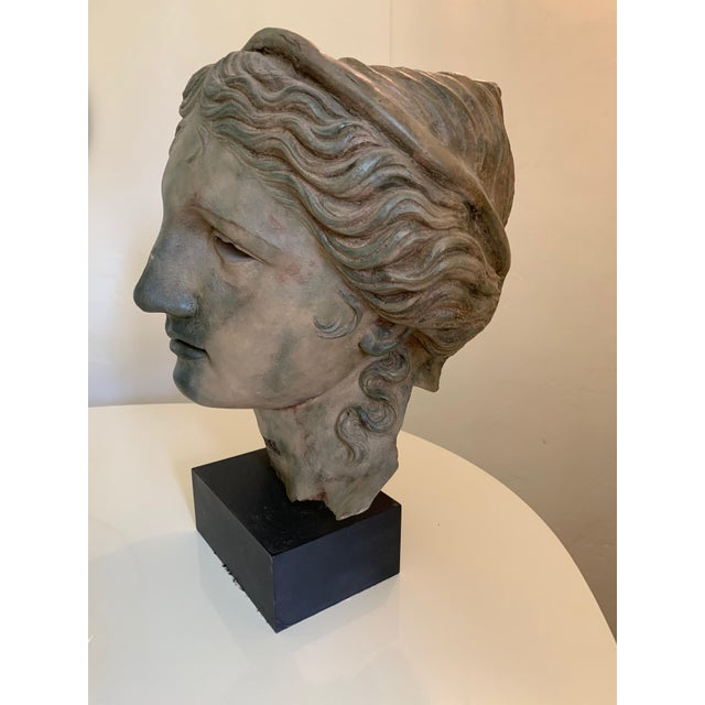 Grand Tour Bust of Adonis, From the British Museum Gift Shop For Sale - Image 3 of 13
