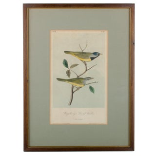 Antique Audubon Birds of America Print For Sale