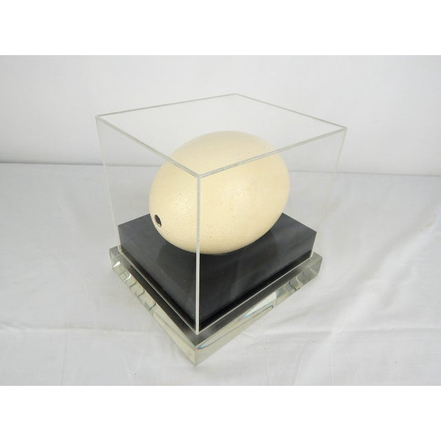 Plastic Lucite Display Case With Ostrich Egg For Sale - Image 7 of 8