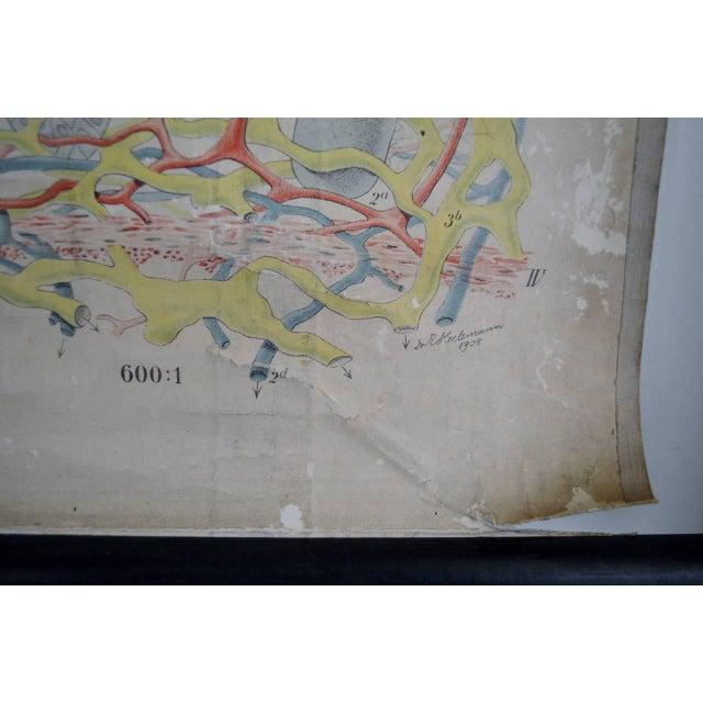 E. Hoelemann Antique Anatomical Chart - Image 5 of 7