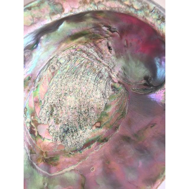 Natural Abalone Shell Bowl - Image 9 of 11