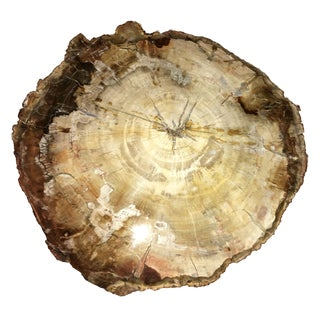 Petrified Large Wood Tray
