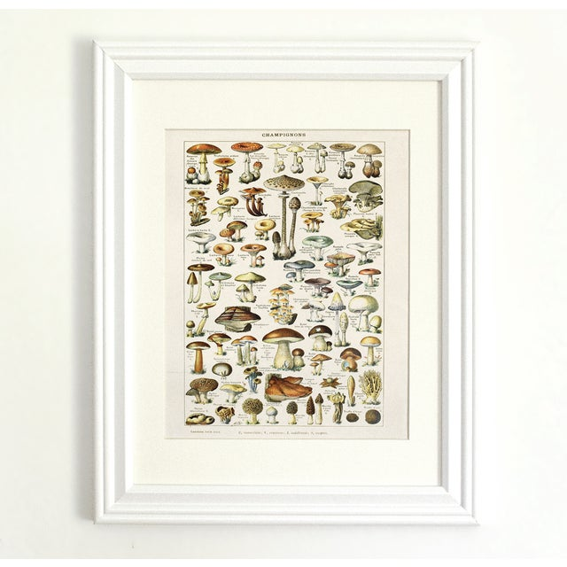 Adolphe Millot Illustrated Mushrooms Canvas Poster - Image 2 of 3