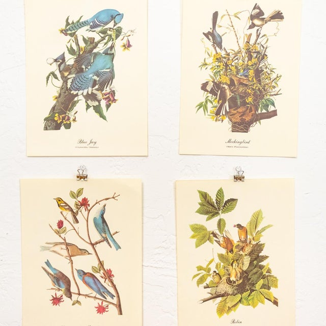 1960s Audubon Bird Prints | 17 Pc Gallery Collection For Sale - Image 9 of 13
