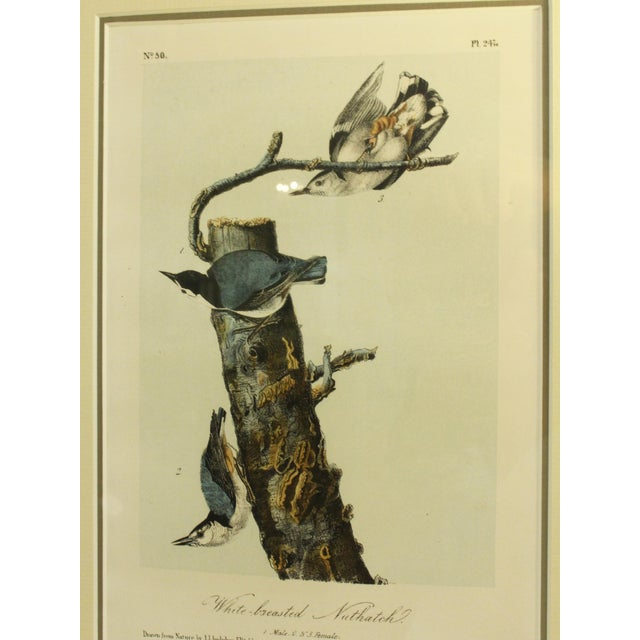 John James Audubon Mid 19th Century Antique John James Audubon Nuthacth Print For Sale - Image 4 of 5