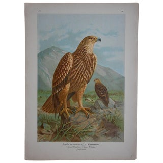 Antique Lithograph Birds of Prey - Large For Sale