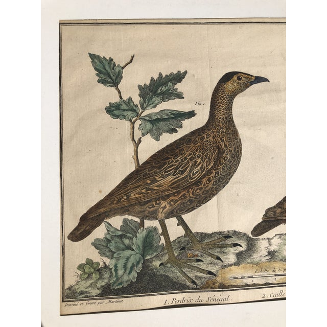 """A matted, hand colored engraving signed """"Martinet,"""" originally from the book """"A Natural History Of Birds"""" by Eleazar..."""