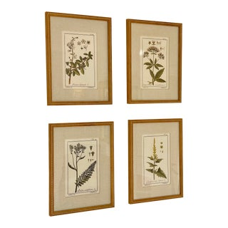 Antique Hand Colored Beautifully Framed Botanical Prints - Set of 4 For Sale