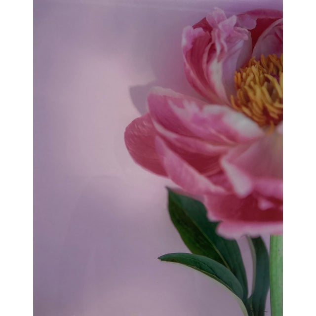 """Framed photograph titled """"Preppy Peony"""" by Susan Johnson Photography. Signed in lower right corner. Professionally framed..."""