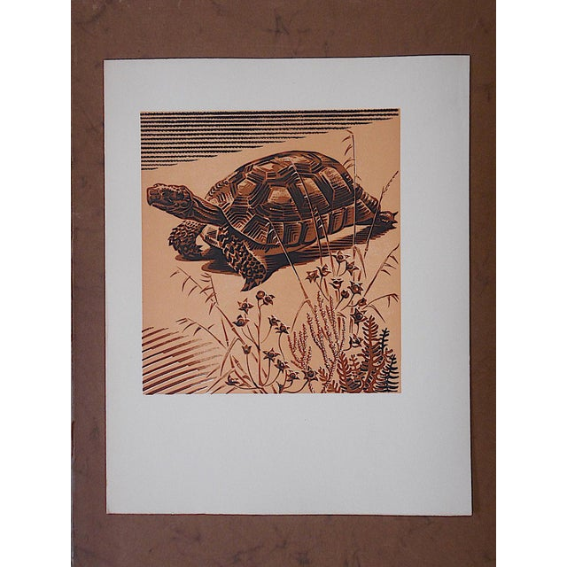 Vintage Ltd. Ed Woodcuts by J. Kefalleno-Greece-Tortoise - Image 2 of 4