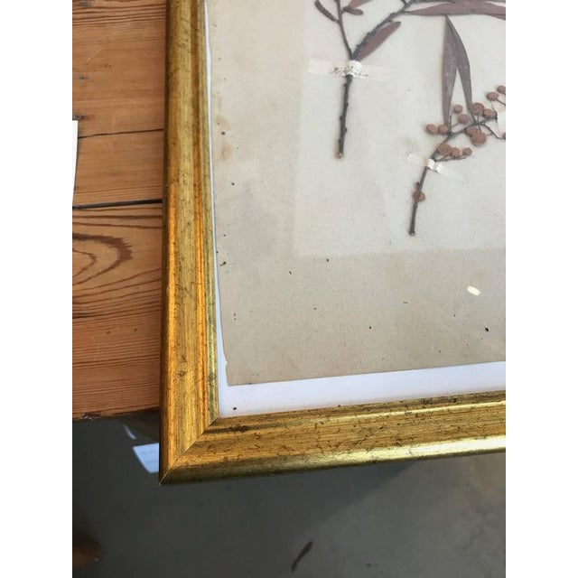 Traditional French Dried Botanical in Gilt Frame For Sale - Image 3 of 4