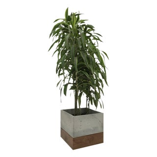Cast Concrete and Walnut Planter For Sale