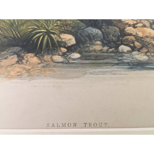 1879 Houghton's London Salmon Trout Lithograph - Image 3 of 3