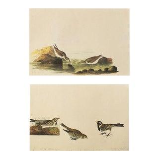 1966 Little Sandpiper and Lapland Longspur by John James Audubon For Sale