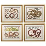 Image of Set of Four Albertus Seba Hand-Colored Snake Prints For Sale
