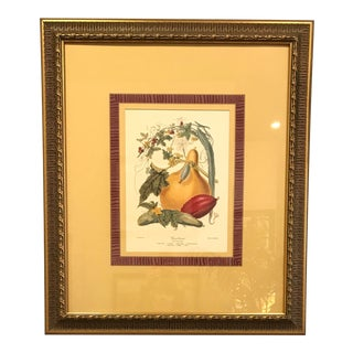"""""""The Gourd Tribe"""" Framed Print From Lexington Home Accessories For Sale"""