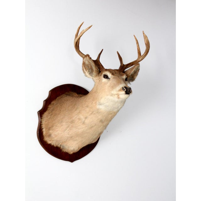 This is an antique deer head mount. The handsome eight point stag head taxidermy is mounted on a wood plaque. In good...