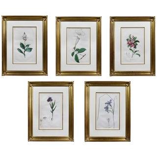 Set of Five Framed Botanicals of Flowers by Hendrik Schwegman For Sale