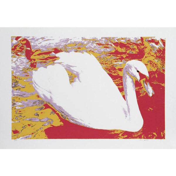 """""""White Swan"""" Print For Sale"""