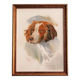 Springer Spaniel Dog Oil on Canvas Portrait
