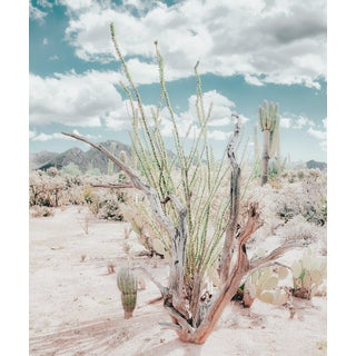 Contemporary 'Cactus Garden — Soft Teal' Photography by Kristin Hart, 32x48 For Sale