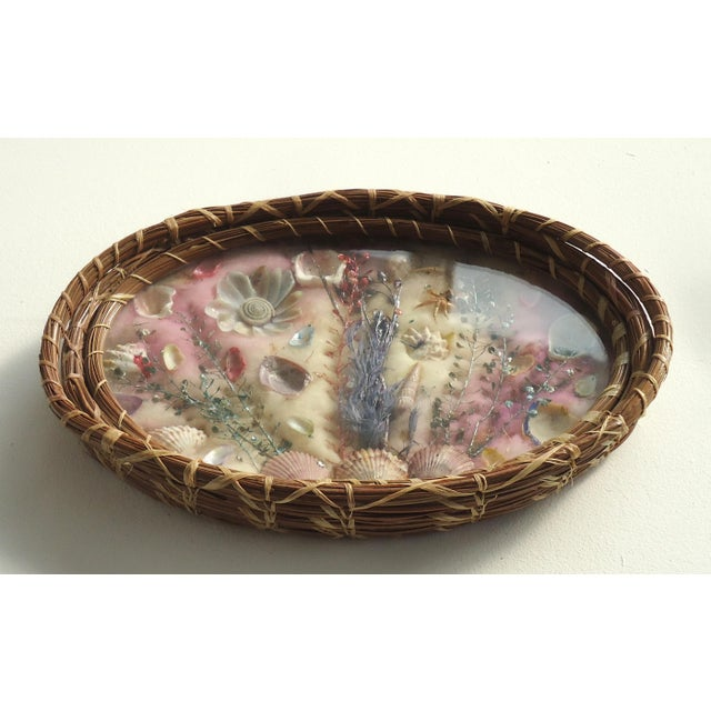 An antique souvenir pine needle basket with an arrangement of seashells and sea plants under glass, backed with cotton...