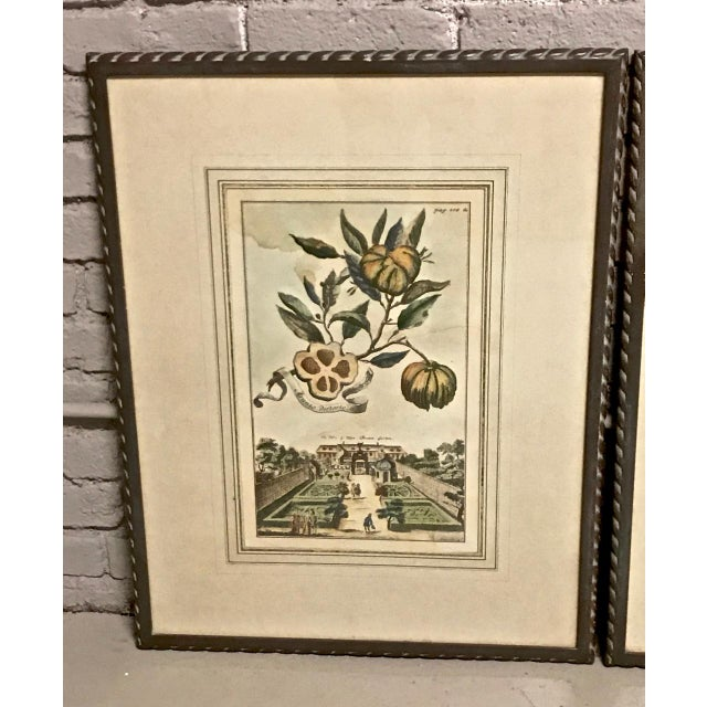 18th Century 18th Century Antique Volkhammer Botanical Engravings - A Pair For Sale - Image 5 of 12