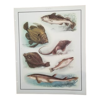 Vintage School Poster of Fish Types For Sale