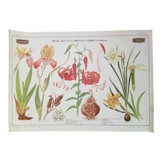 1940s Botanical Flower Poster For Sale