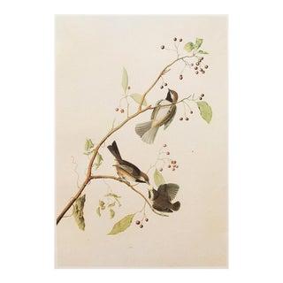 1966 Audubon, Boreal Chickadee Vintage Cottage Style Print For Sale