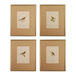 Four Antique Chromolithograph Bird Prints For Sale