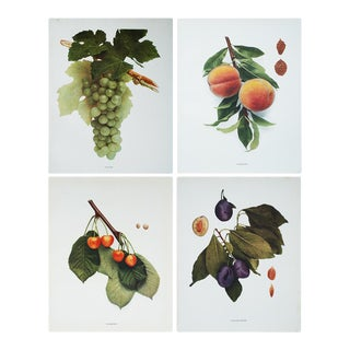 1900s Photogravures of Fruits of Ny by Hedrick - Set of 4