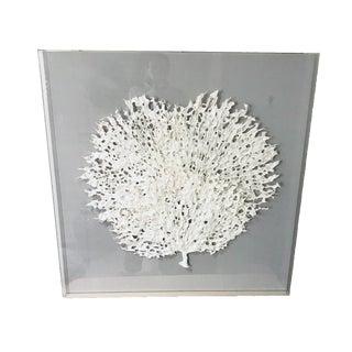 Framed Acrylic Sea Fan Coral Paper