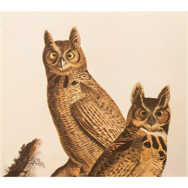 American 1960s Cottage Lithograph of Great Horned Owl by Audubon For Sale - Image 3 of 9