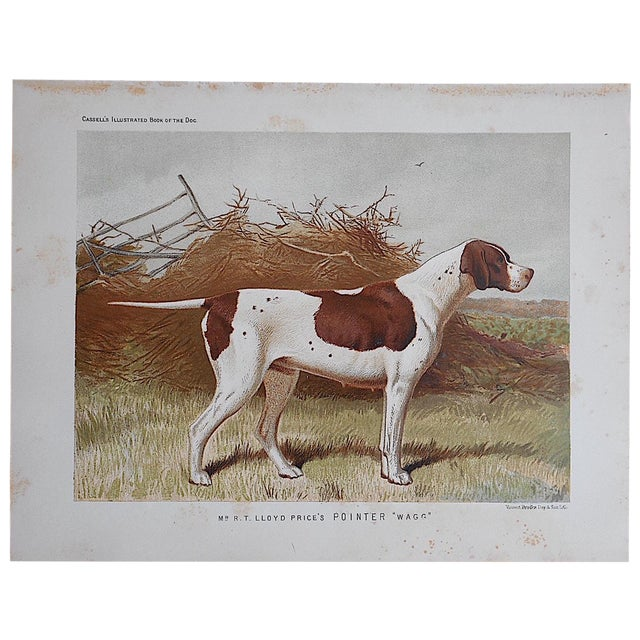"Antique Dog Lithograph ""Pointer"" - Image 1 of 3"
