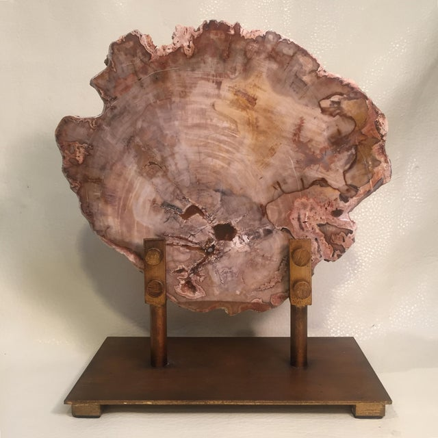 Metal Petrified Wood Tree Slice on Museum Stand For Sale - Image 7 of 8