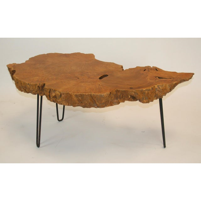 1960s Mid-Century Modern Live Edge Burl Root Table on Steel Hairpin Legs For Sale - Image 4 of 4