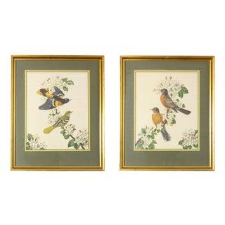 Framed Vintage James Gordon Irving Bird Illustrations - a Pair For Sale